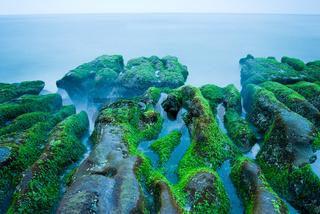 Rocky Seacoast full of green seaweed
