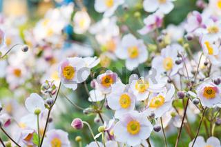 lit by sunlight flowers in the garden