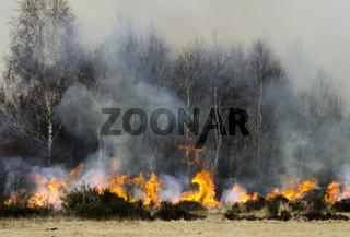 Brandrodung in der Drover Heide