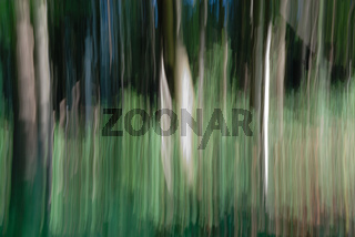 Waldbild Phainting Nr. 103