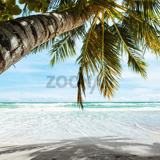 Tropical beach in the morning. Square composition.