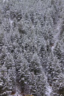 Bridger Teton National Forest Wyoming
