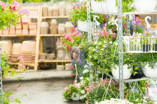 Hangup pots with flowers in garden center