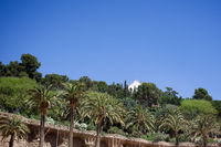 Green trees of Park Guell in Barcelona, Spain