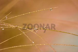 Gras im Regen