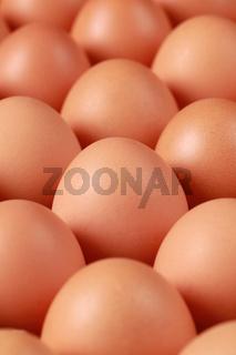 Braune Eier in einer Schachtel