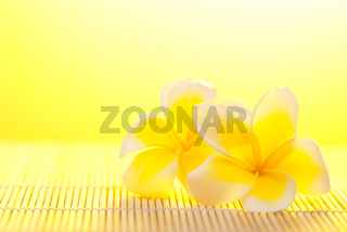Leelawadee flower on bamboo background