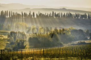 Chianti-Weinlandschaft bei Bibbiano, Toskana, Italy