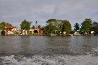 Jungle - harbour city
