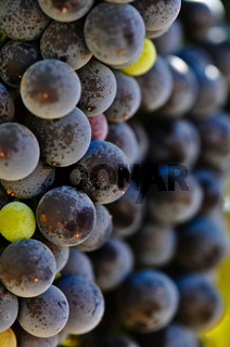 Red Wine Grapes Close Up