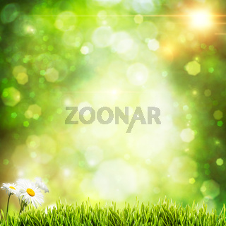 Abstract natural backgrounds with beauty bokeh and daisy flowers