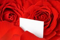 Valentine card amidst red roses and petals