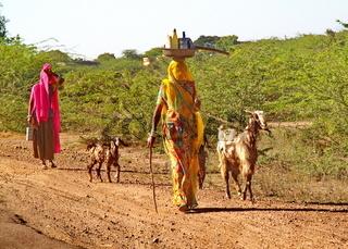 Indische Frauen mit Ziegen