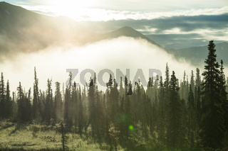 Forest on Alaska
