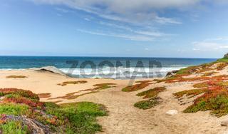 Spring Beach Foliage at Monterey Bay, California
