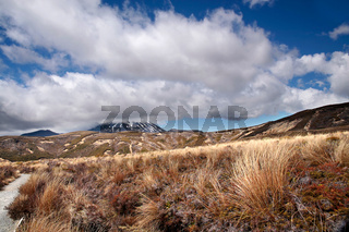Karge Landschaft im Tongariro Nationalpark