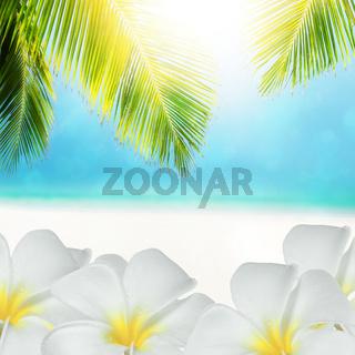 Tropical scene. Square composition.