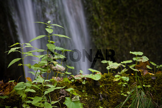 Eine Pflanze am Wasserfall