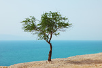 Picturesque tree on dry cliff