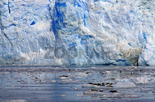 Kalte Kunderstube: Robben vor Gletscher