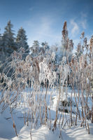 hoarfrost