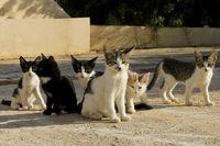 Katzenfamilie auf Futtersuche