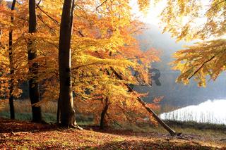 Unesco Welterbe Grumsiner Buchenwald