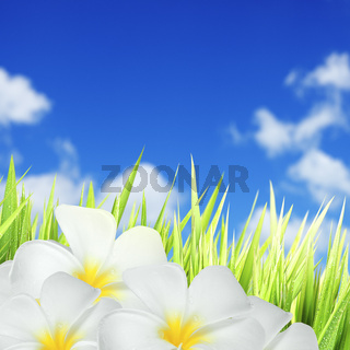 Green grass and white flowers. Square composition.