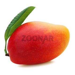 Fresh mango fruit isolated on white background.