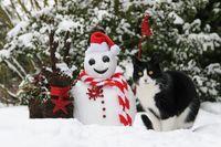 Hauskatze neben Nikolaus Schneemann / Cat beside a Santa snowman