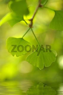 Zartes Grün mit Spiegelung