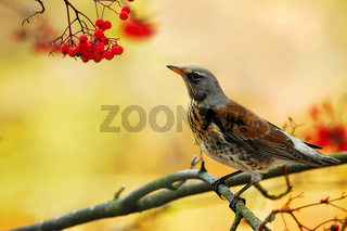 Posing a bird