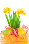 Easter eggs and spring yellow narcissus (daffodil)
