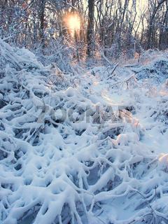 Allerton Park Winter Scenery