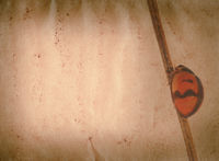 insect ladybug old grunge paper texture
