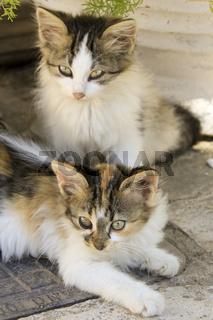 zwei kleine, griechische Katzen