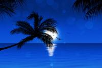 Blue Tropical Sunset