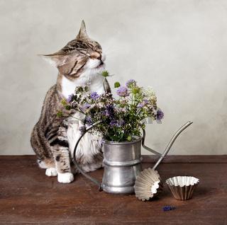 Stilleben mit Katze
