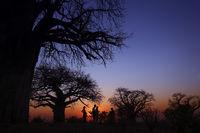 Touristen in Afrika auf einer Fußsafari