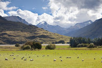 mount aspiring