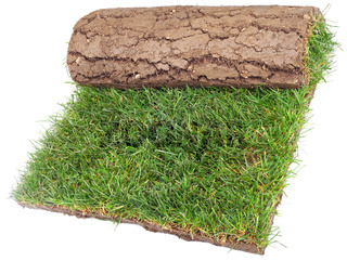Roll of Grass Rug