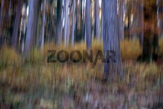 Waldbild, träumerisch, picture of a forest, blurred, soft