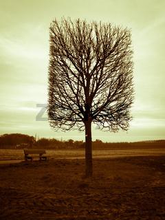 Der einsame Viereck-Baum