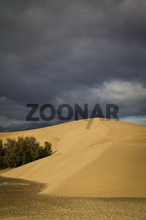 Wüste - El Oasis - Wueste