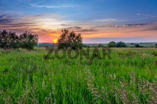 Sunset over grassland
