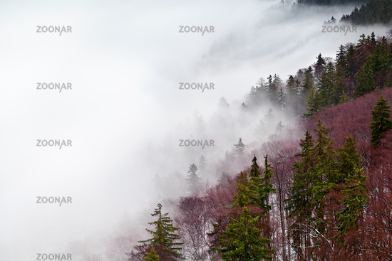 Harz mountains in fog