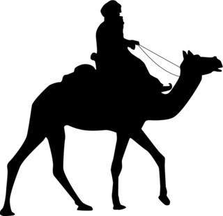 Kamelreiter Beduine