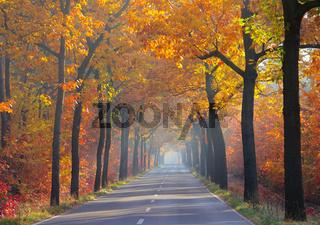 Allee im Herbst - avenue in fall 25