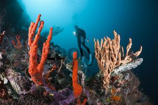 Taucher an Korallenriff