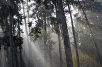 Sonne scheint in einen Wald